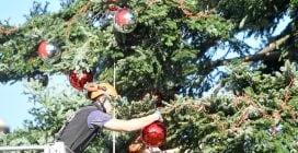 Roma, allestimento dell'albero di Natale a Piazza Venezia