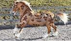 """""""Disegni"""" sulla pelliccia del cavallo: le immagini a cui non crederai"""