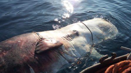 Capodoglio morto a Ischia: trovati nello stomaco plastica e nylon