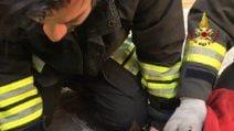 Incendio a Bologna, fiamme dalla lavatrice. Cane intossicato salvato dai pompieri