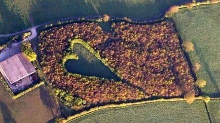 Pianta 6000 alberi per onorare la moglie morta: dopo 15 anni ecco il risultato