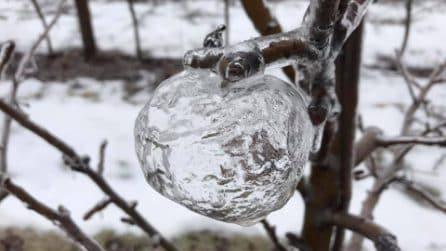 Le mele di ghiaccio: le immagini bellissime che hanno catturato l'attenzione