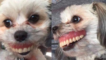La cagnolina ha rubato le protesi dentarie del padrone: le divertenti immagini
