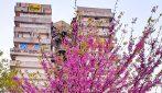 Le splendide immagini della primavera di Scampia