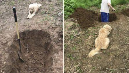 L'uomo scava la tomba per il suo cane che assiste: le immagini strazianti