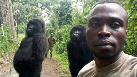 Fa un selfie all'interno del parco naturalistico: i gorilla si mettono in posa alle sue spalle