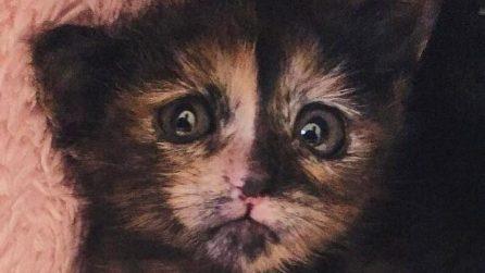 Lissone, chiusi in un sacco e buttati nell'immondizia: salvati tre gattini di venti giorni