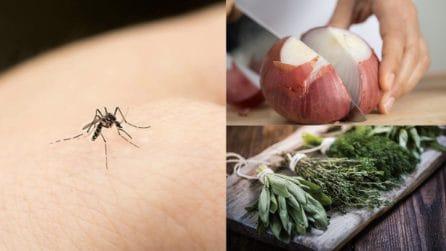 6 rimedi naturali contro le zanzare: ecco come tenerle lontane