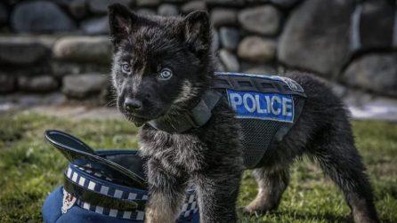 """La polizia pubblica le foto delle """"nuove leve"""": giovani i cani poliziotto crescono"""