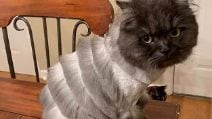 Vuole tagliare il pelo al gatto: ma il risultato è davvero bizzarro