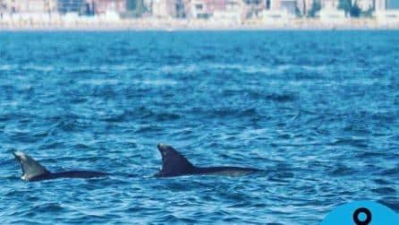 Roma, avvistati delfini: uno nuota con una pinna coperta da una busta di plastica