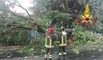 Gessate (Milano), il forte vento abbatte un albero: travolta un'auto e una cabina dell'Enel