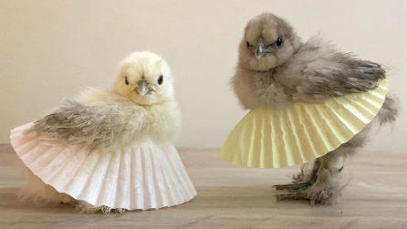 Polli in tutù: le divertenti immagini raccolte da Instagram