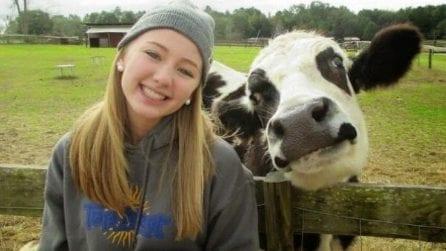 Le 10 foto che mostrano come le mucche siano simili ai cani