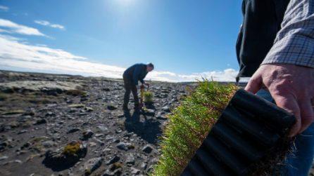 Gli islandesi stanno facendo rinascere le foreste rase al suolo dai vichingi