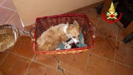 Cinque cuccioli salvati dai vigili del fuoco a Sezze: incastrati nell'intercapedine di una scala