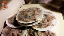 Torino, al ristorante cinese: carne involtini primavera contaminati da insetti