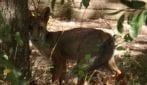 Roma, i cuccioli di volpe appena nata a Villa Pamphilj