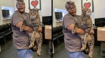 La foto di un enorme gatto che cerca casa, diventa virale