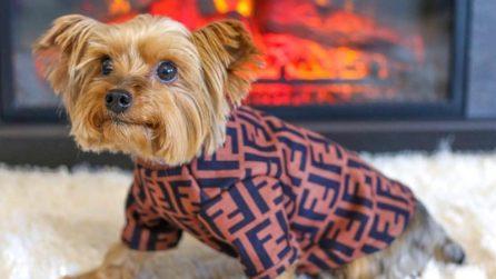 Gli abiti e gli accessori griffati per cani e gatti