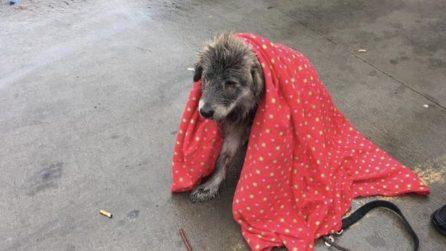"""Tremante e ferito, la donna salva il cane in difficoltà: """"Gli hanno fatto del male"""""""