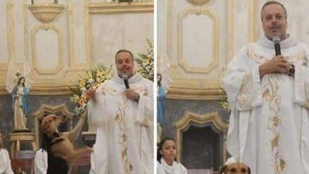 Il prete che durante la messa promuove l'adozione dei cani randagi