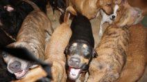 Salva 97 cani dalla furia dell'uragano Dorian: la donna li accoglie tutti i casa sua