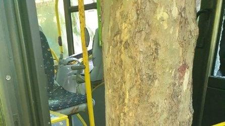 Pescara, bus carico di passeggeri si schianta, diversi feriti