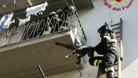 Resta incastrato alla ringhiera di un balcone: il salvataggio dei vigili del fuoco