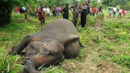 Sri Lanka: trovati morti 7 elefanti, probabile avvelenamento