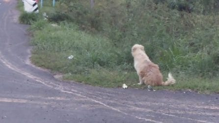 Ogni giorno il cane torna in quel preciso punto da 4 anni: il motivo vi spezzerà il cuore