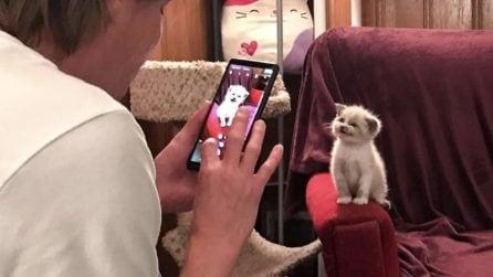 Ogni volta che il padrone prende il cellulare il piccolo si mette in posa: il gatto sorridente