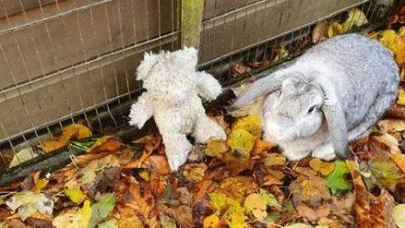 Vedono una scatola abbandonata: all'interno c'è un coniglietto e il suo piccolo peluche