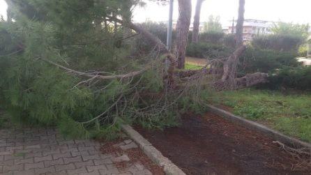Nuova Ponte di Nona, cade un ramo nel Parco Sinisgalli: le immagini