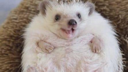 Il riccio che ride sempre: come iniziare la giornata di buon umore