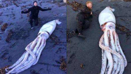 Trovano un calamaro gigante spiaggiato: è lungo oltre 3 metri