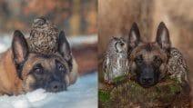 L'insolita amicizia tra un cane e due gufetti