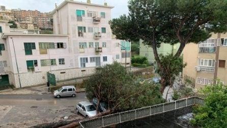 Maltempo, due grossi alberi si abbattono in strada a Soccavo