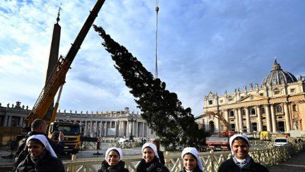 Roma, arriva l'albero di Natale in piazza San Pietro