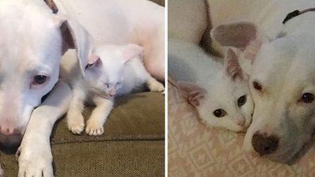 Gattino salvato dalla strada ha un nuovo amico da coccolare