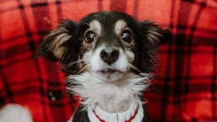 La gioia di un cane abbandonato incatenato, quando capisce di essere stato salvato