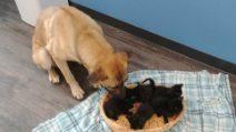 Cane randagio protegge col suo corpo i cinque cuccioli: il cuore grande degli animali