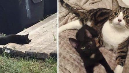 Gattino malato salvato dalla strada: trova un amico e non si separa più da lui