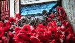Usa i papaveri per realizzare il suo nido in un memoriale e mette al mondo una nuova vita