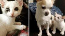 Gattino salvato dalla strada fa di tutto per diventare amico del cagnolino di casa