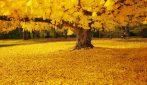 L'oro del parco della Resistenza, lo scenario stupendo a Formigine