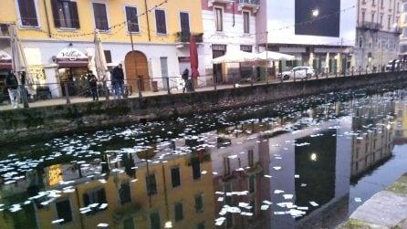 Scena da film sui Navigli: in acqua compaiono centinaia di banconote, ma sono false