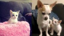 Salva una gattina dalla strada: il cane di casa, la adotta come una figlia