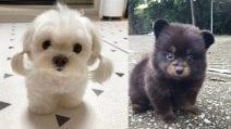 I cuccioli più carini che abbiate mai visto