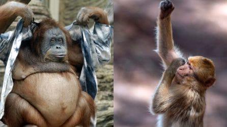 """Tutta l'ironia delle scimmie: i gesti più comici e """"umani"""""""